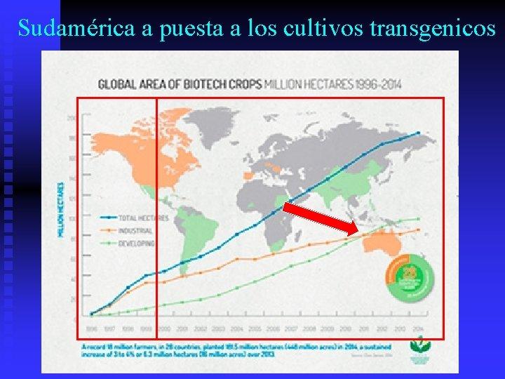Sudamérica a puesta a los cultivos transgenicos
