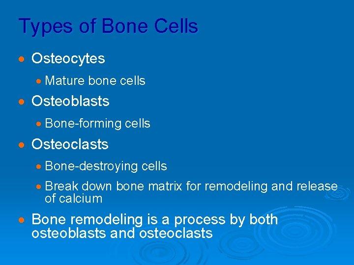 Types of Bone Cells · Osteocytes · Mature bone cells · Osteoblasts · Bone-forming