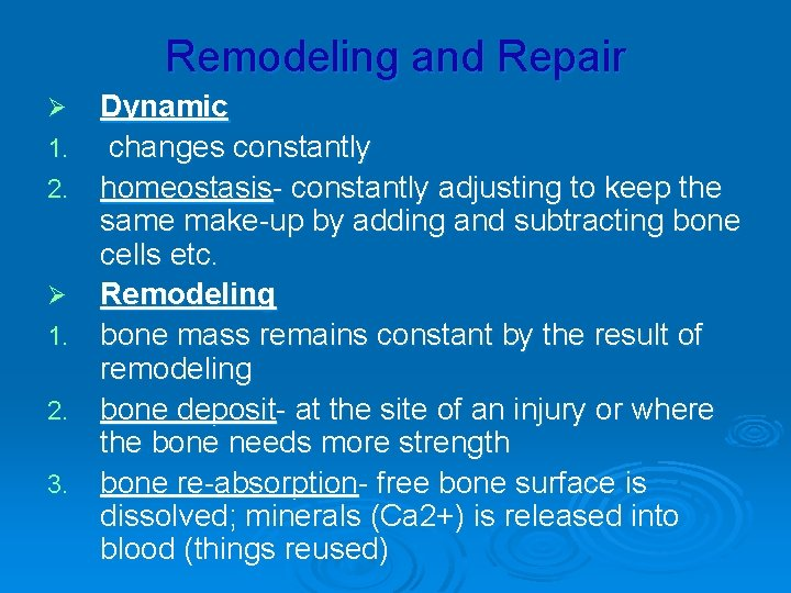 Remodeling and Repair Ø 1. 2. 3. Dynamic changes constantly homeostasis- constantly adjusting to