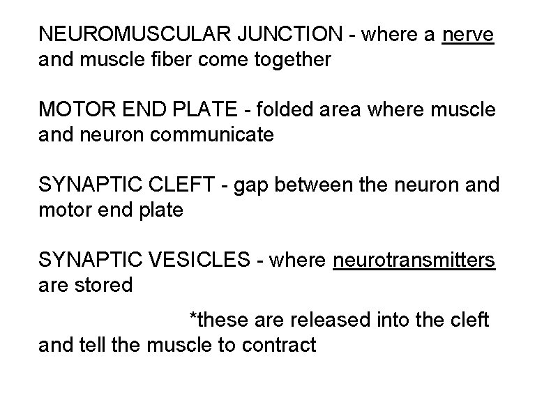 NEUROMUSCULAR JUNCTION - where a nerve and muscle fiber come together MOTOR END PLATE