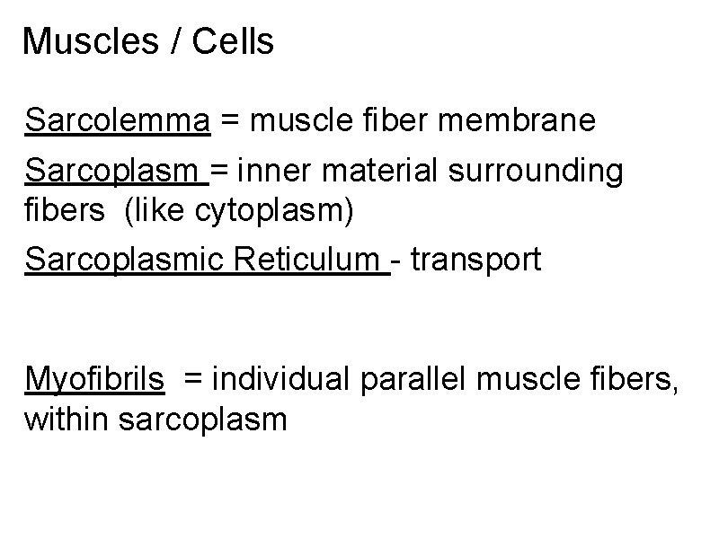 Muscles / Cells Sarcolemma = muscle fiber membrane Sarcoplasm = inner material surrounding fibers