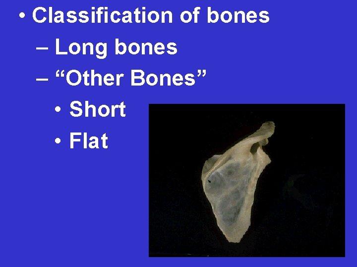 "• Classification of bones – Long bones – ""Other Bones"" • Short •"