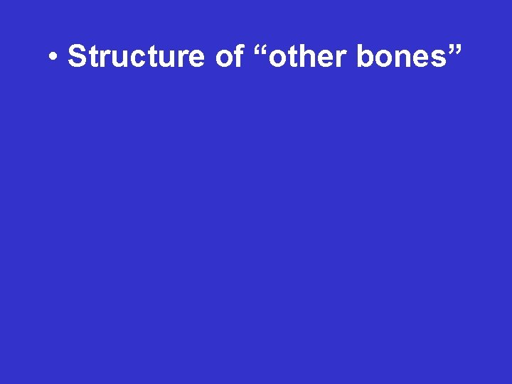 """• Structure of """"other bones"""""""