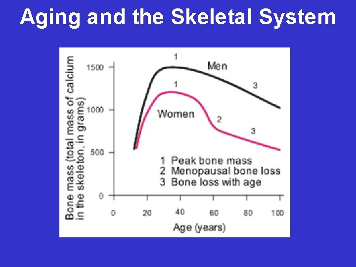 Aging and the Skeletal System
