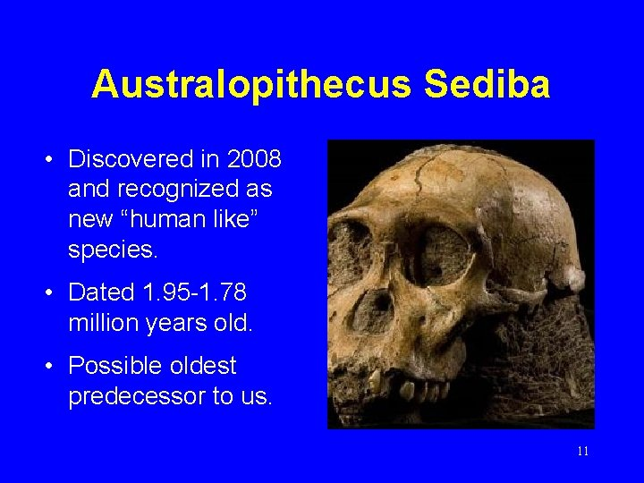 """Australopithecus Sediba • Discovered in 2008 and recognized as new """"human like"""" species. •"""