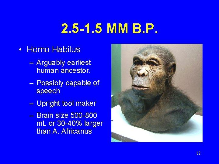 2. 5 -1. 5 MM B. P. • Homo Habilus – Arguably earliest human