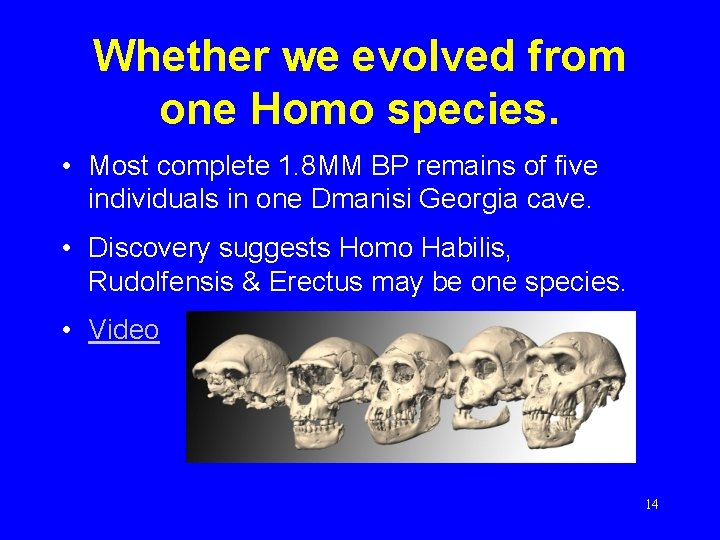 Whether we evolved from one Homo species. • Most complete 1. 8 MM BP