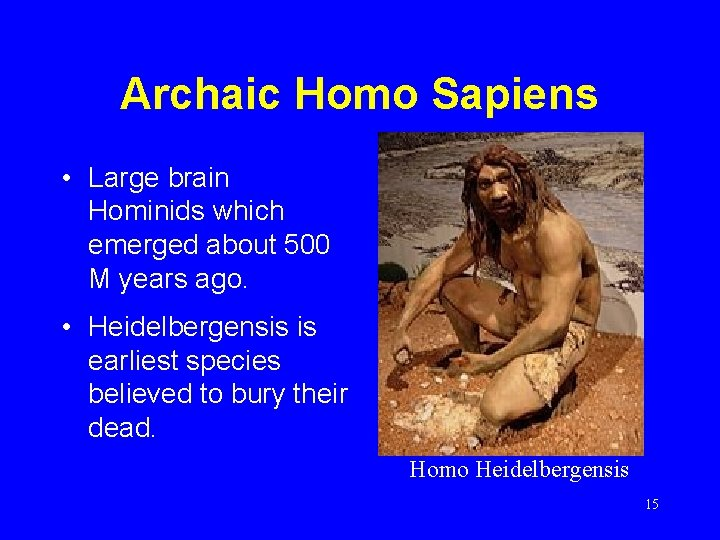 Archaic Homo Sapiens • Large brain Hominids which emerged about 500 M years ago.