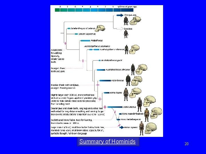 Summary of Hominids 20