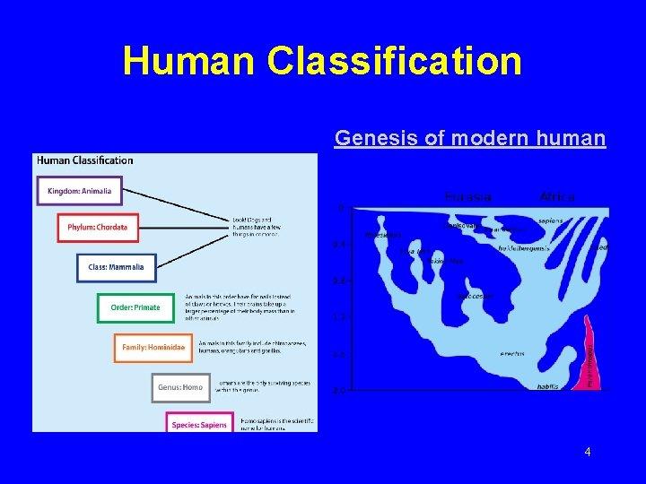 Human Classification Genesis of modern human 4