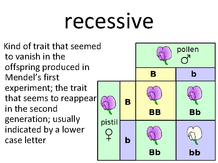 recessive Kind of trait that seemed to vanish in the offspring produced in Mendel's