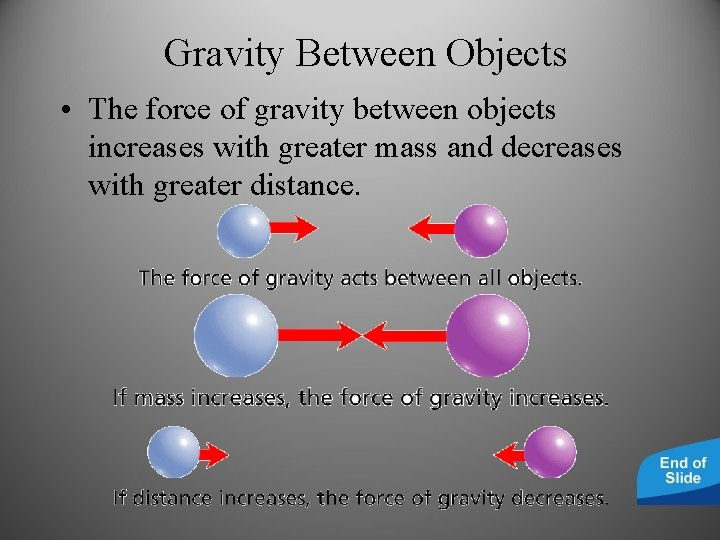 Gravity Between Objects • The force of gravity between objects increases with greater mass