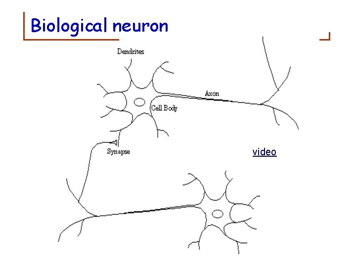 Biological neuron video