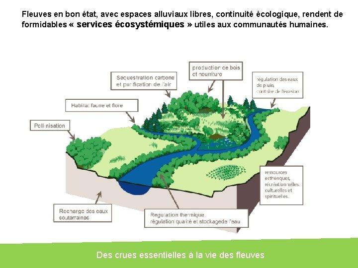 Fleuves en bon état, avec espaces alluviaux libres, continuité écologique, rendent de formidables «