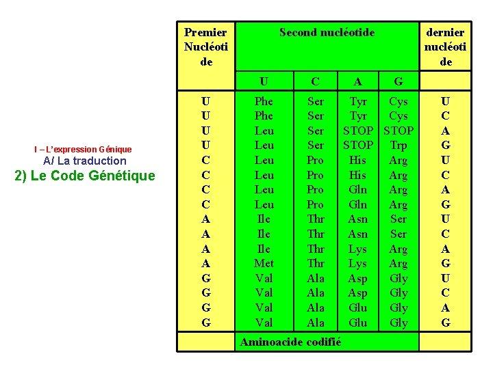 Premier Nucléoti de I – L'expression Génique A/ La traduction 2) Le Code Génétique