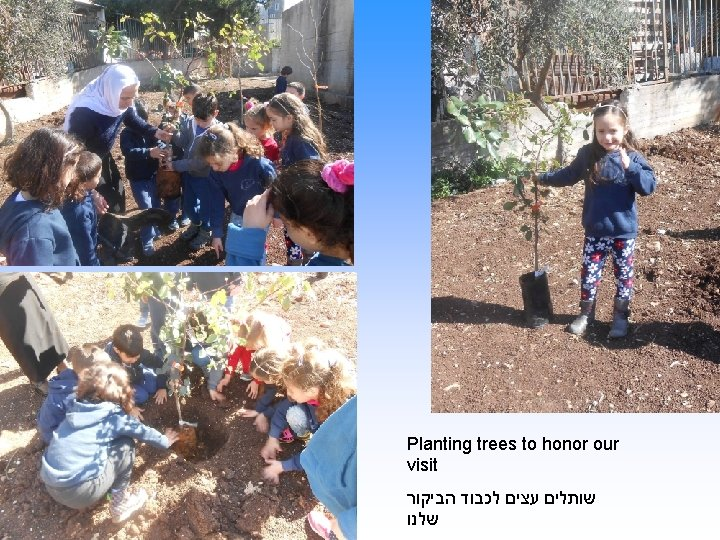 Planting trees to honor our visit שותלים עצים לכבוד הביקור שלנו
