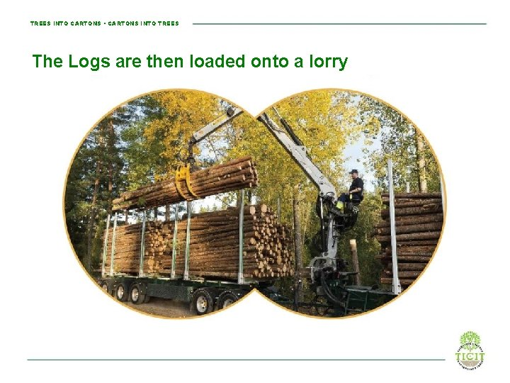 TREES INTO CARTONS • CARTONS INTO TREES The Logs are then loaded onto a