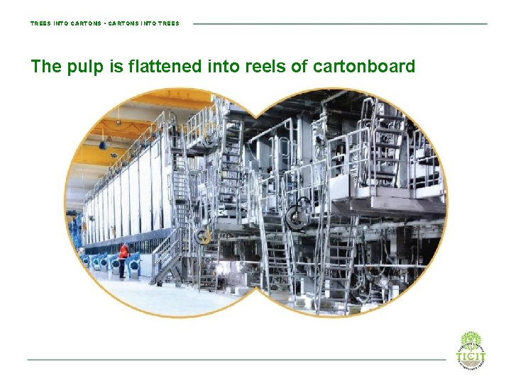 TREES INTO CARTONS • CARTONS INTO TREES The pulp is flattened into reels of