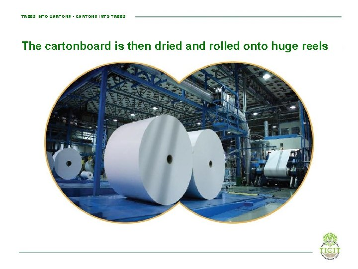 TREES INTO CARTONS • CARTONS INTO TREES The cartonboard is then dried and rolled