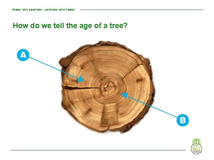TREES INTO CARTONS • CARTONS INTO TREES How do we tell the age of