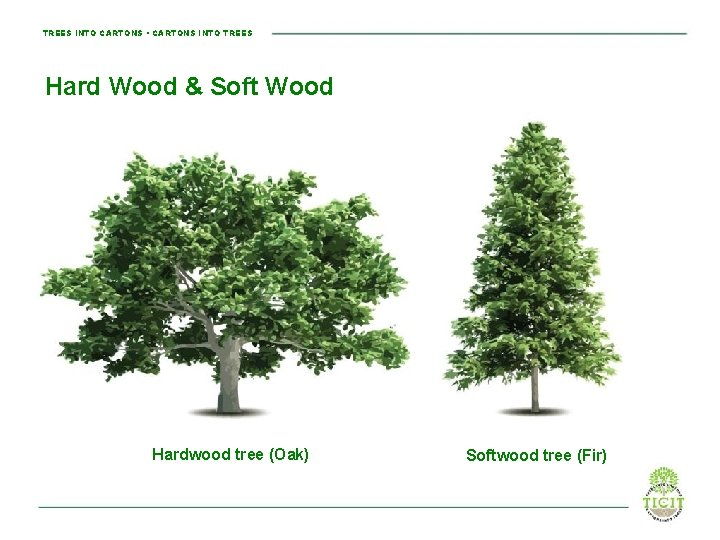 TREES INTO CARTONS • CARTONS INTO TREES Hard Wood & Soft Wood Hardwood tree
