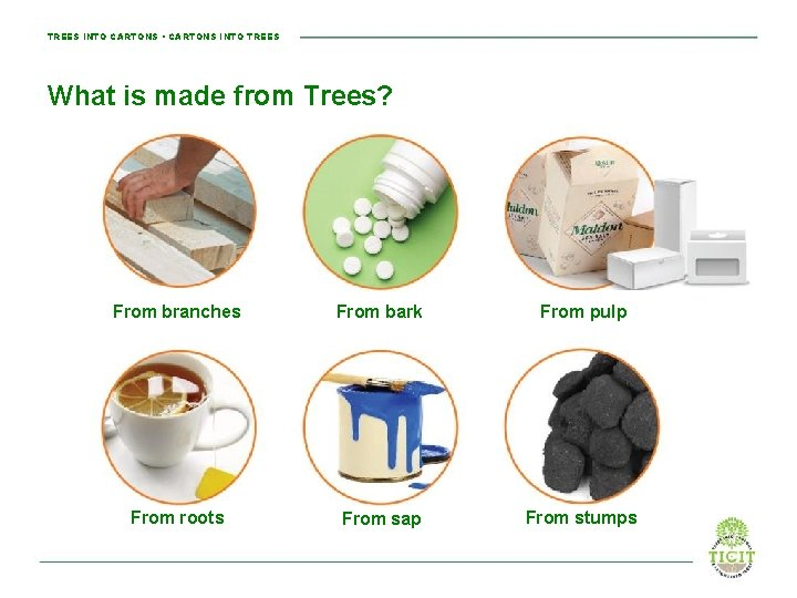 TREES INTO CARTONS • CARTONS INTO TREES What is made from Trees? From branches