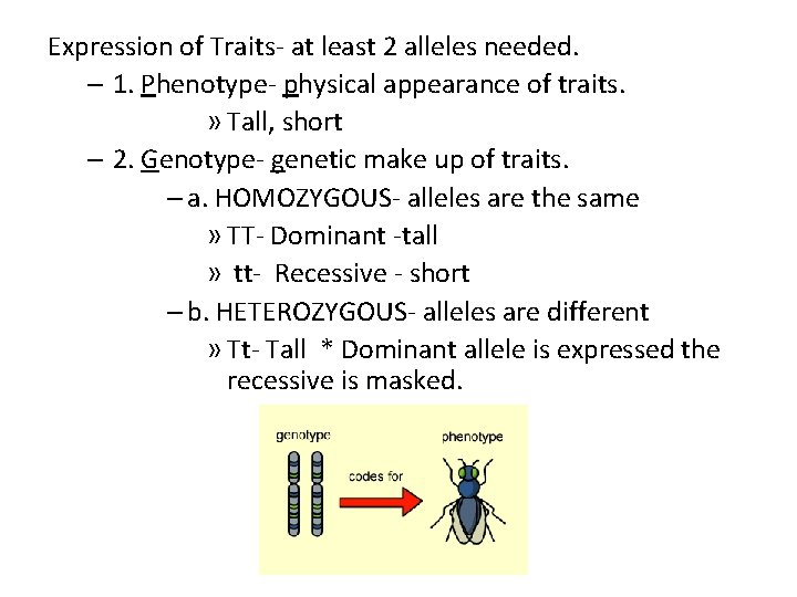 Expression of Traits- at least 2 alleles needed. – 1. Phenotype- physical appearance of