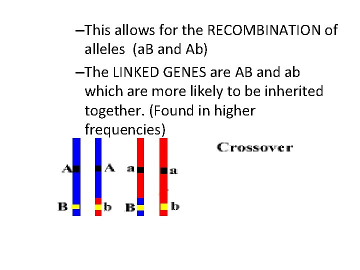 –This allows for the RECOMBINATION of alleles (a. B and Ab) –The LINKED GENES