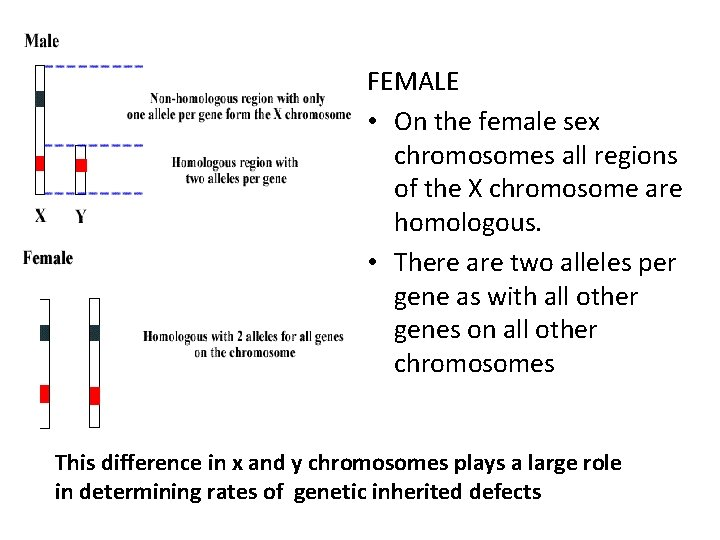 FEMALE • On the female sex chromosomes all regions of the X chromosome are