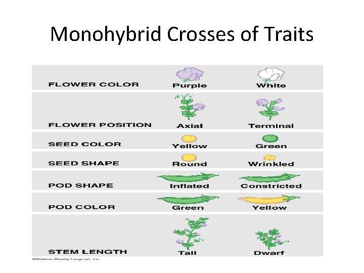 Monohybrid Crosses of Traits