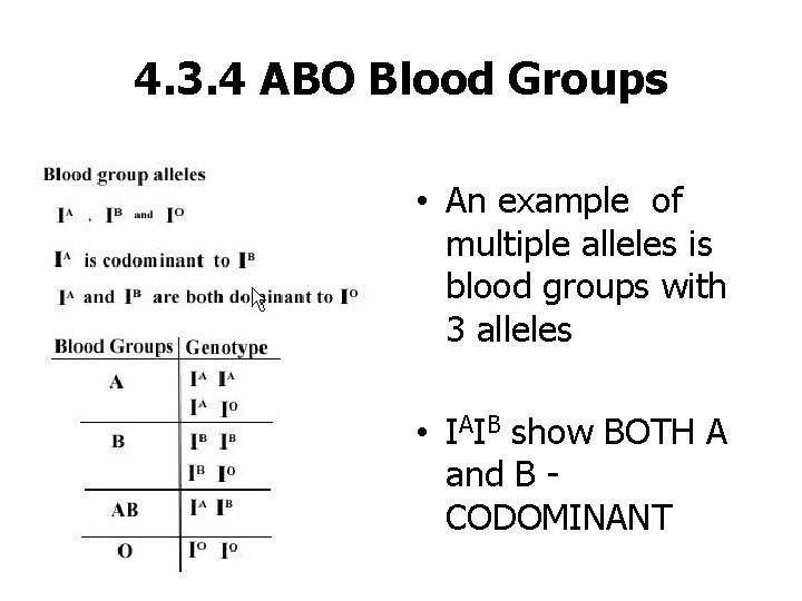 4. 3. 4 ABO Blood Groups • An example of multiple alleles is blood