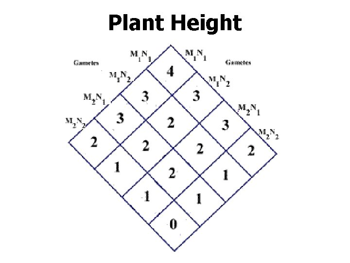 Plant Height
