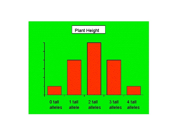 Plant Height 0 tall alleles 1 tall allele 2 tall alleles 3 tall alleles