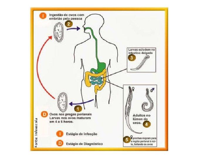 analize la paraziti papillomavirus behandeling