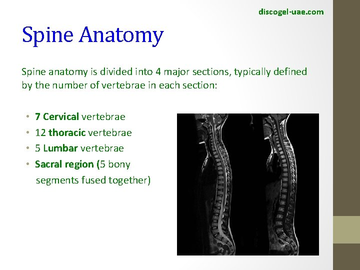 discogel-uae. com Spine Anatomy Spine anatomy is divided into 4 major sections, typically defined