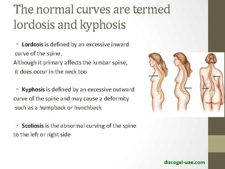 The normal curves are termed lordosis and kyphosis • Lordosis is defined by an