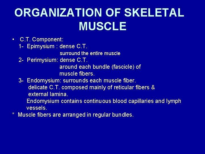 ORGANIZATION OF SKELETAL MUSCLE • C. T. Component: 1 - Epimysium : dense C.