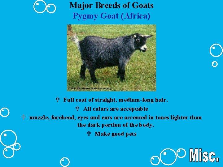 Major Breeds of Goats Pygmy Goat (Africa) U Full coat of straight, medium-long hair.