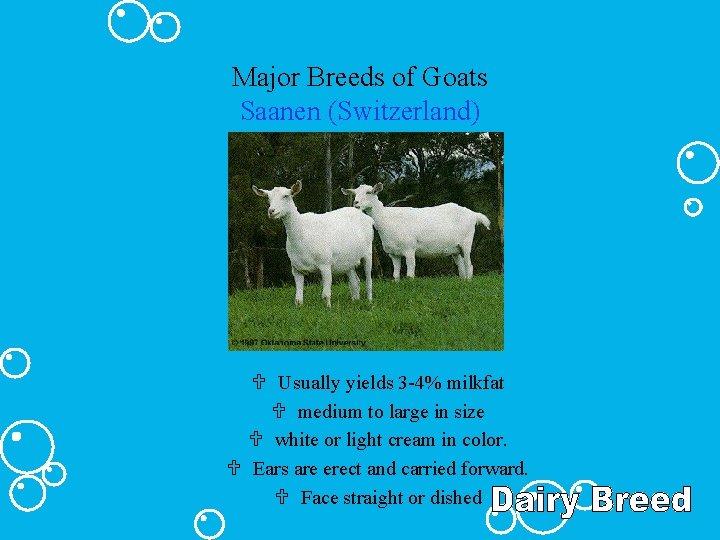 Major Breeds of Goats Saanen (Switzerland) U Usually yields 3 -4% milkfat U medium