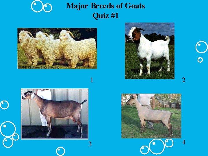 Major Breeds of Goats Quiz #1 1 2 3 4