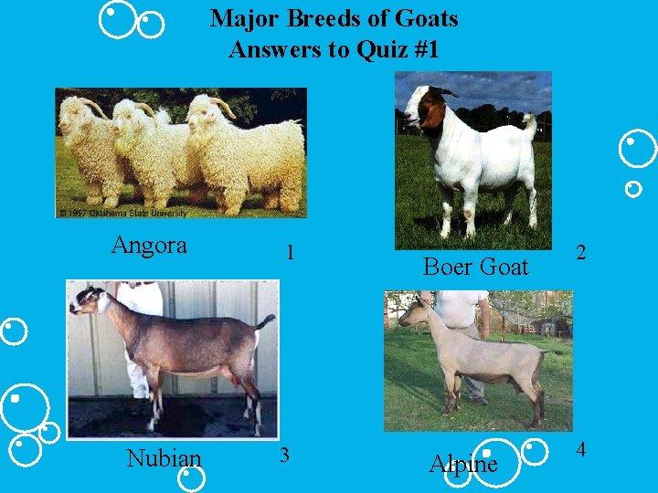 Major Breeds of Goats Answers to Quiz #1 Angora Nubian 1 3 Boer Goat
