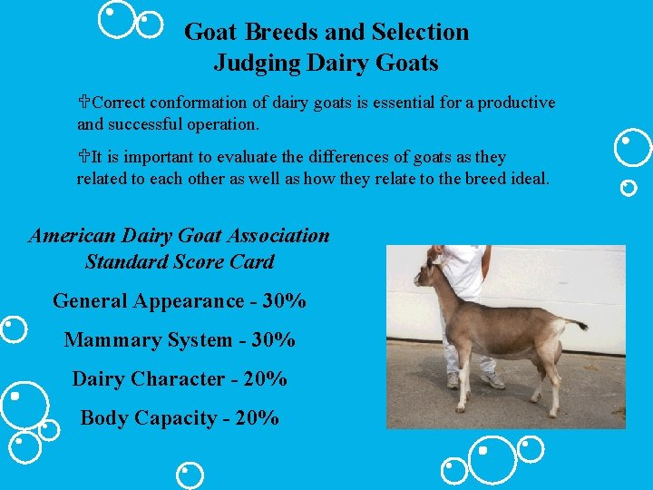 Goat Breeds and Selection Judging Dairy Goats UCorrect conformation of dairy goats is essential