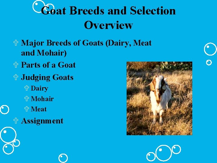 Goat Breeds and Selection Overview U Major Breeds of Goats (Dairy, Meat and Mohair)