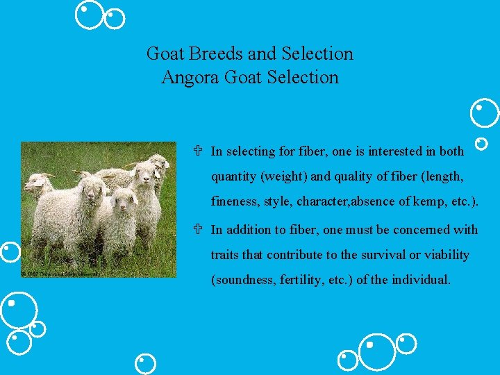 Goat Breeds and Selection Angora Goat Selection U In selecting for fiber, one is