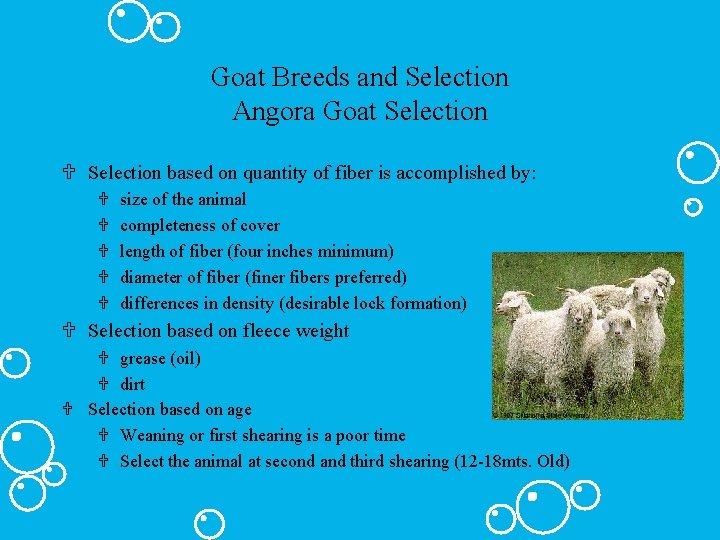 Goat Breeds and Selection Angora Goat Selection U Selection based on quantity of fiber