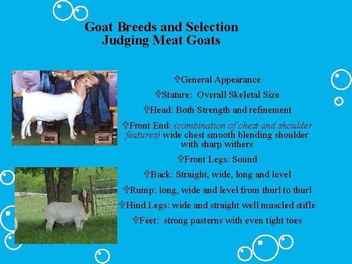 Goat Breeds and Selection Judging Meat Goats UGeneral Appearance UStature: Overall Skeletal Size UHead: