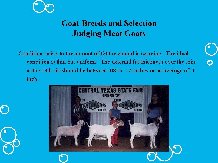 Goat Breeds and Selection Judging Meat Goats Condition refers to the amount of fat