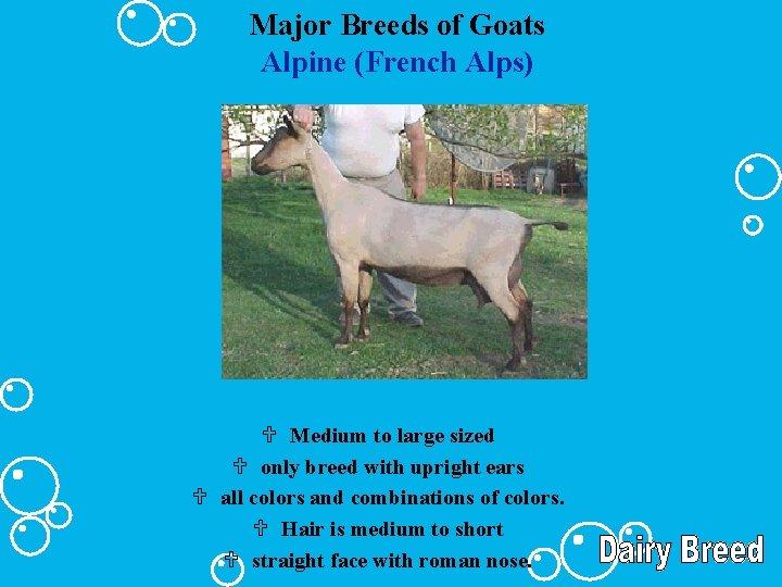 Major Breeds of Goats Alpine (French Alps) U Medium to large sized U only