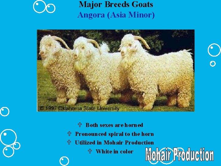 Major Breeds Goats Angora (Asia Minor) U Both sexes are horned U Pronounced spiral