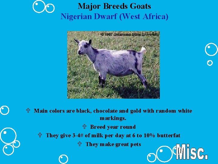 Major Breeds Goats Nigerian Dwarf (West Africa) U Main colors are black, chocolate and